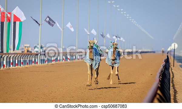 Camel racing in dubai camels with robot jokeys at racing camel racing in dubai csp50687083 thecheapjerseys Image collections