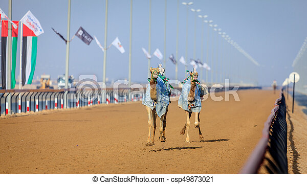 Camel racing in dubai camels with robot jokeys at racing practice camel racing in dubai csp49873021 thecheapjerseys Image collections