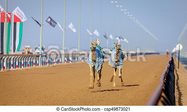 Camel racing in dubai camels with robot jokeys at racing stock camel racing in dubai csp49873021 thecheapjerseys Choice Image