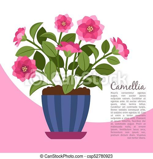 Camellia Indoor Plant In Pot Banner
