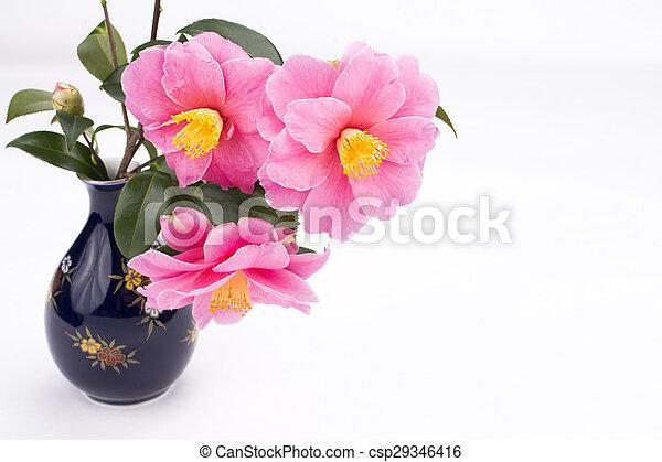 Camellia sasanqua flowers - csp29346416