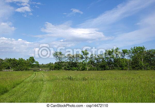 caminho, direção, verde, portão - csp14472110