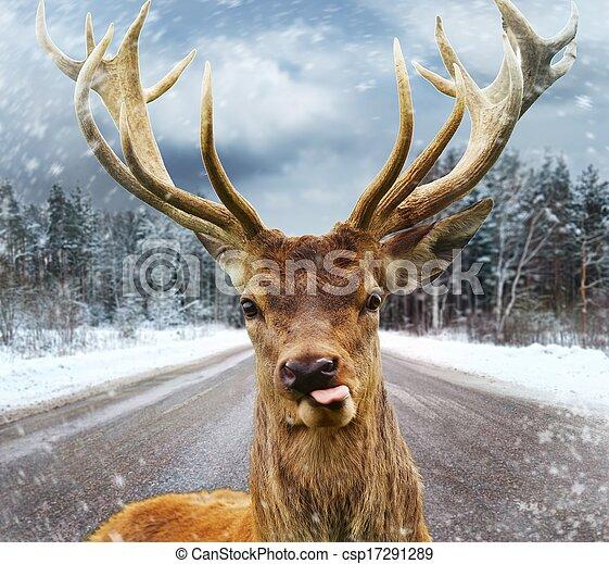 Ciervos con hermosos cuernos en una carretera de invierno - csp17291289
