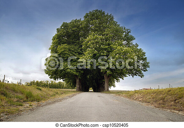 Árboles a cada lado de una carretera - csp10520405