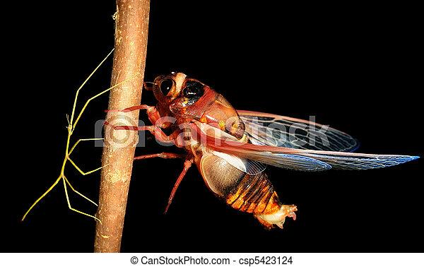 Camminare cicala insetto insetto bastone foto d for Camminare in piani di progettazione dispensa