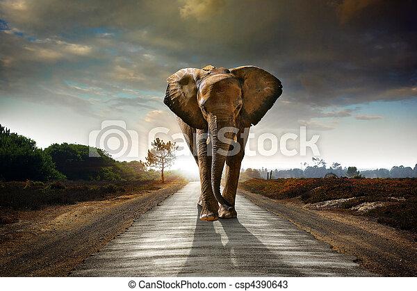camminare, elefante - csp4390643