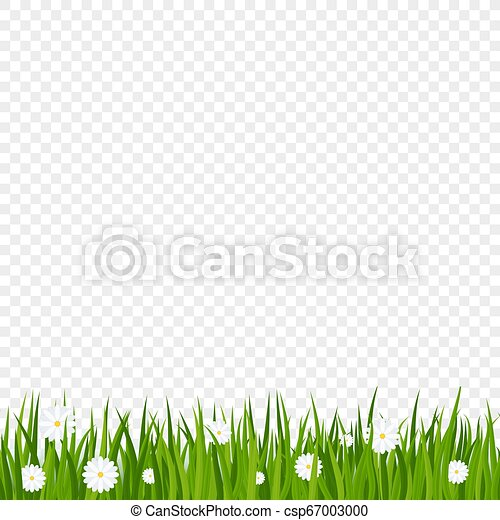 Camomiles and a green grass border on transparent background - csp67003000