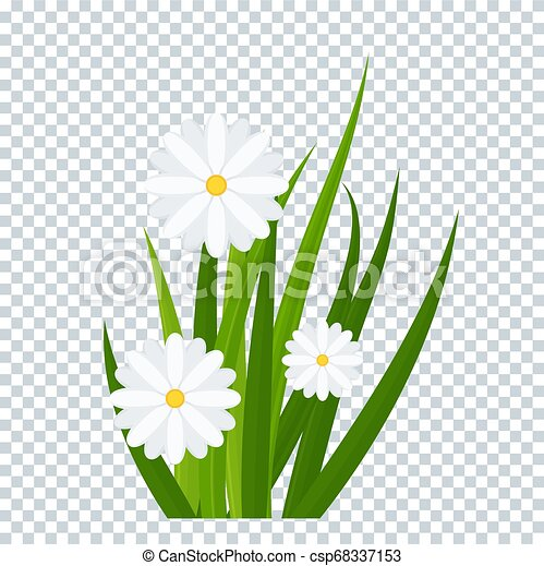Camomiles and a green grass on transparent background - csp68337153