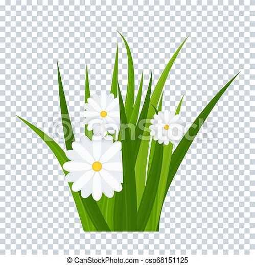 Camomiles and a green grass on transparent background - csp68151125