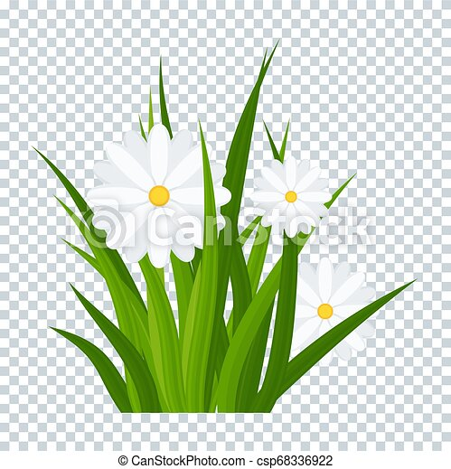 Camomiles and a green grass on transparent background - csp68336922