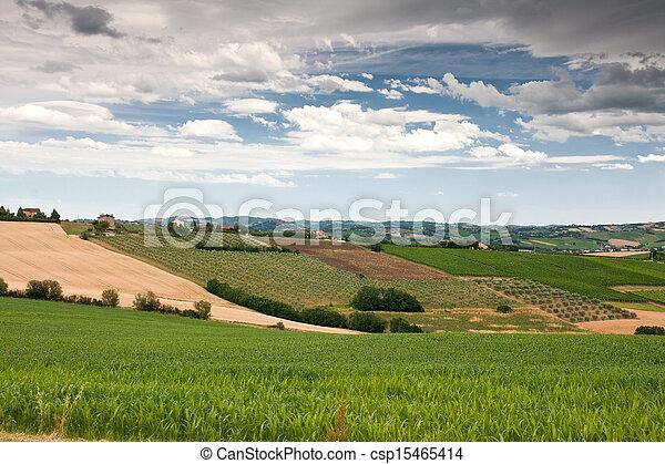 campagne, marche, le, italie, vallonné - csp15465414