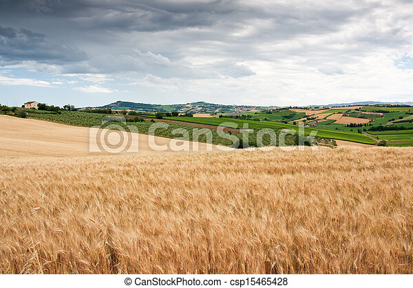 campagne, marche, le, italie, vallonné - csp15465428