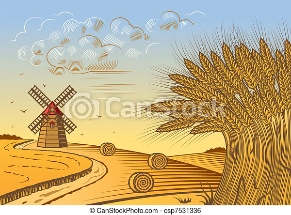 campi, frumento, paesaggio - csp7531336