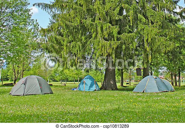 Camping under large pine tree - csp10813289