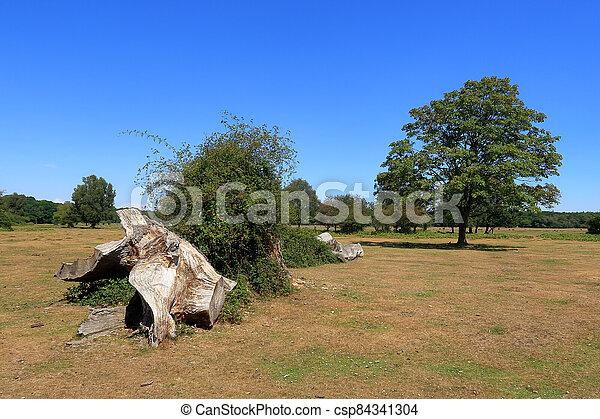 campo, brockenhurst, escena, bosque - csp84341304