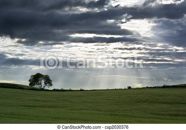campo, buckwheat. - csp2030376