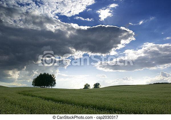 campo, buckwheat. - csp2030317