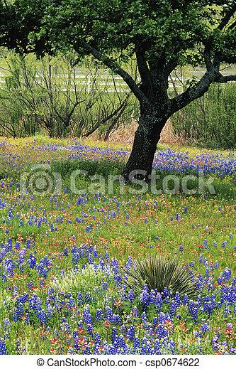Campo de flores silvestres Texas Hill country - csp0674622