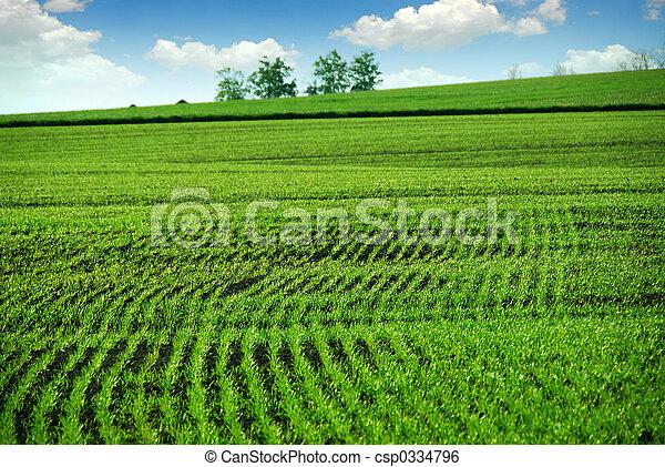 campo de la granja, verde - csp0334796