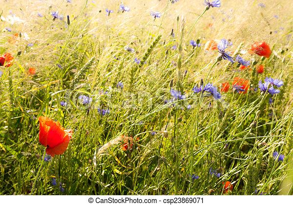 campo, flores - csp23869071