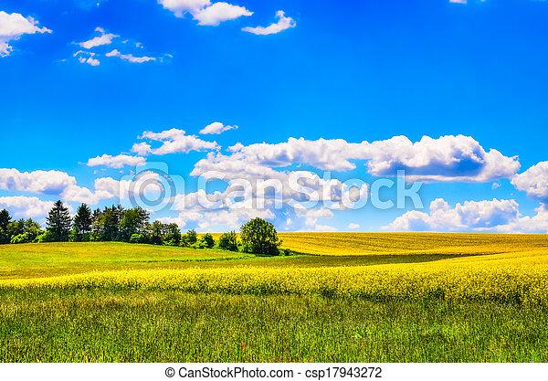 campo, flores, prado verde, amarela - csp17943272
