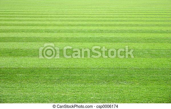 campo hierba - csp0006174