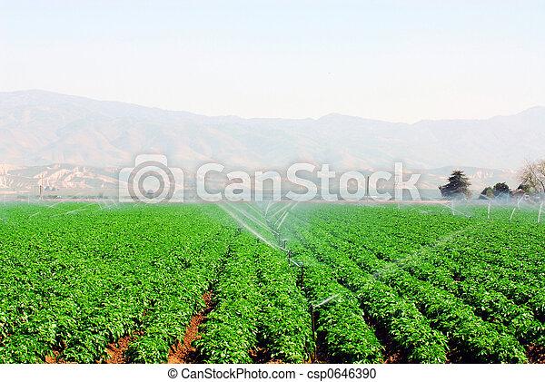 campo, legumes - csp0646390