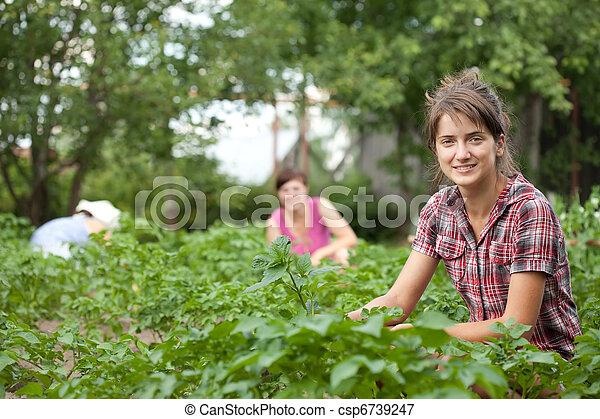 Mujeres trabajando en campo de patatas - csp6739247