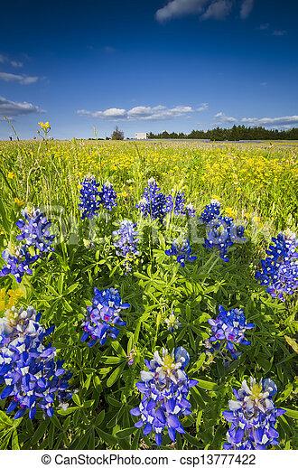 Campo de flores en Palmer, TX - csp13777422
