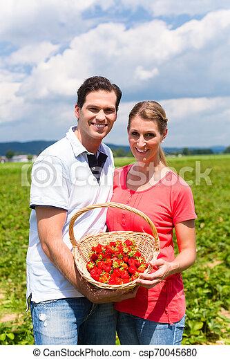 campo, par, morangos, colheita, sees - csp70045680