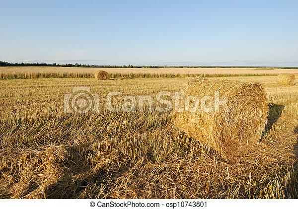 campo, trigo - csp10743801