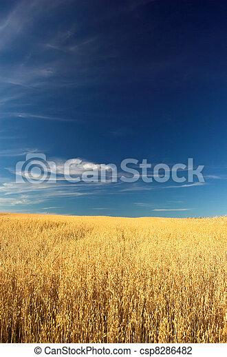 campo, trigo - csp8286482