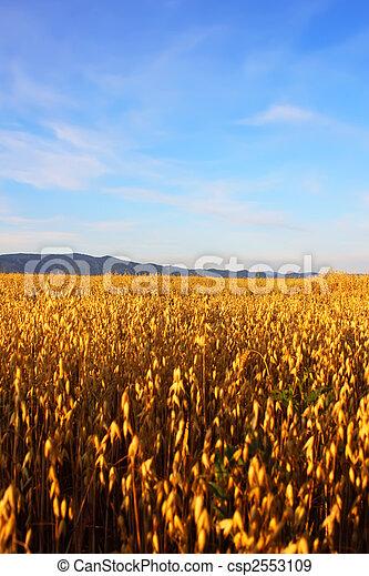 campo, trigo - csp2553109