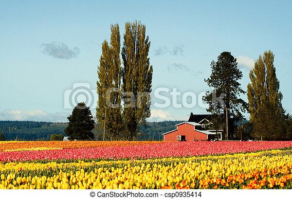 campo tulip - csp0935414