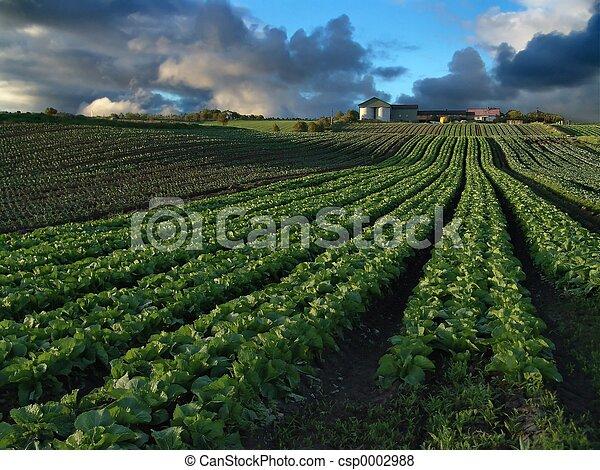 Crops - csp0002988