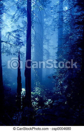 Oregon Forest - csp0004680