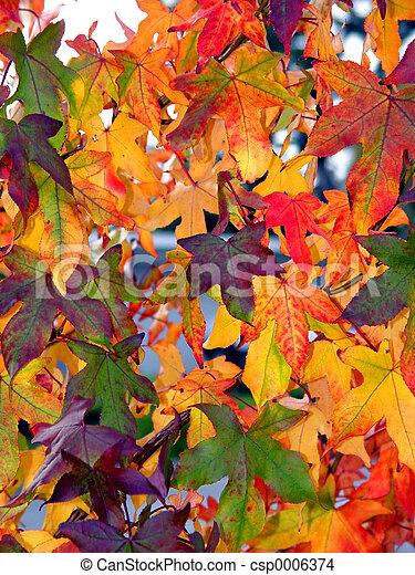 otoño, patrón - csp0006374