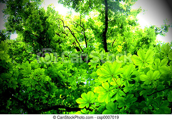 Leaves - csp0007019
