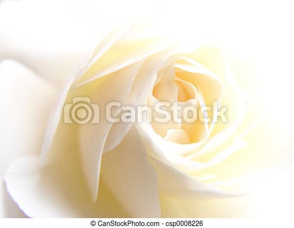 rosa, bianco - csp0008226