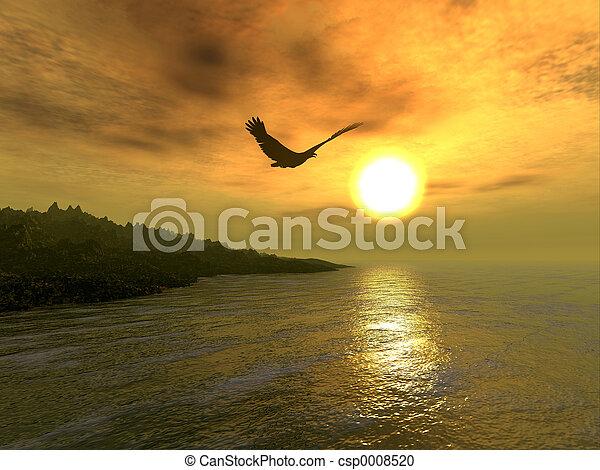鷹, 海岸 - csp0008520