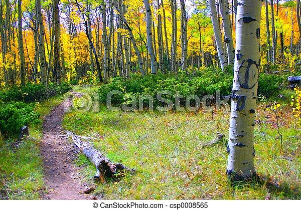 Aspen Path - csp0008565