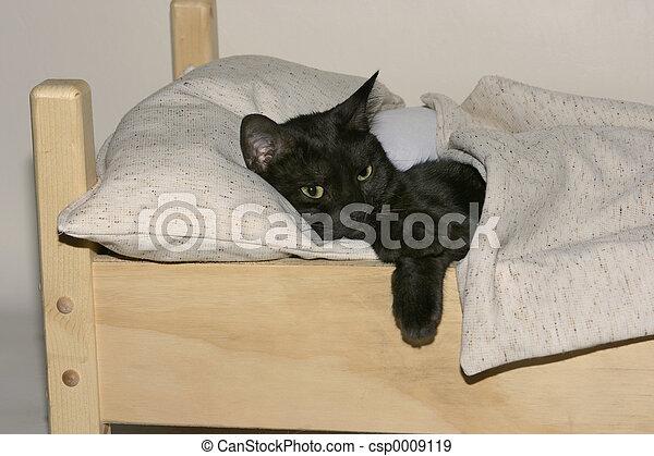 sleepy kitty - csp0009119