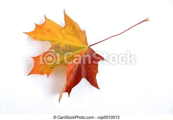 otoño, hoja - csp0010013