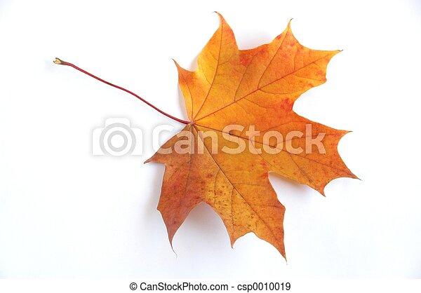 otoño, hoja - csp0010019