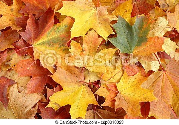 otoño, hojas - csp0010023