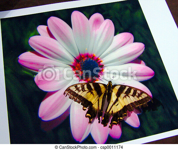 Butterfly photo - csp0011174