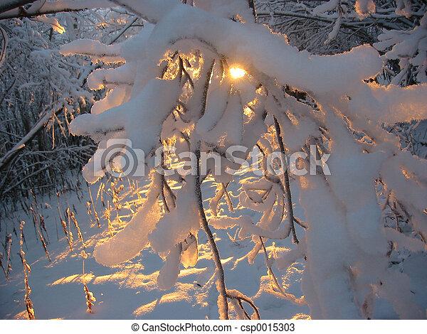 Coucher soleil, hiver - csp0015303