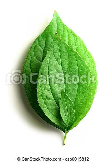 Three leaves - csp0015812