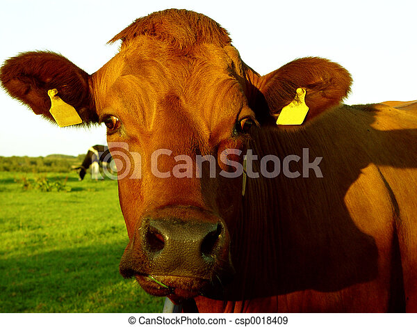 a cow, wow!