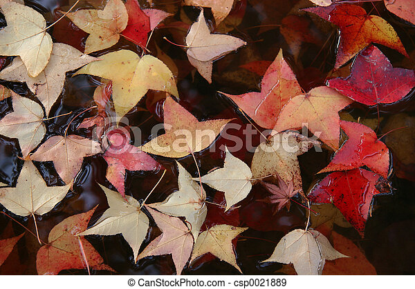 Water leaves.